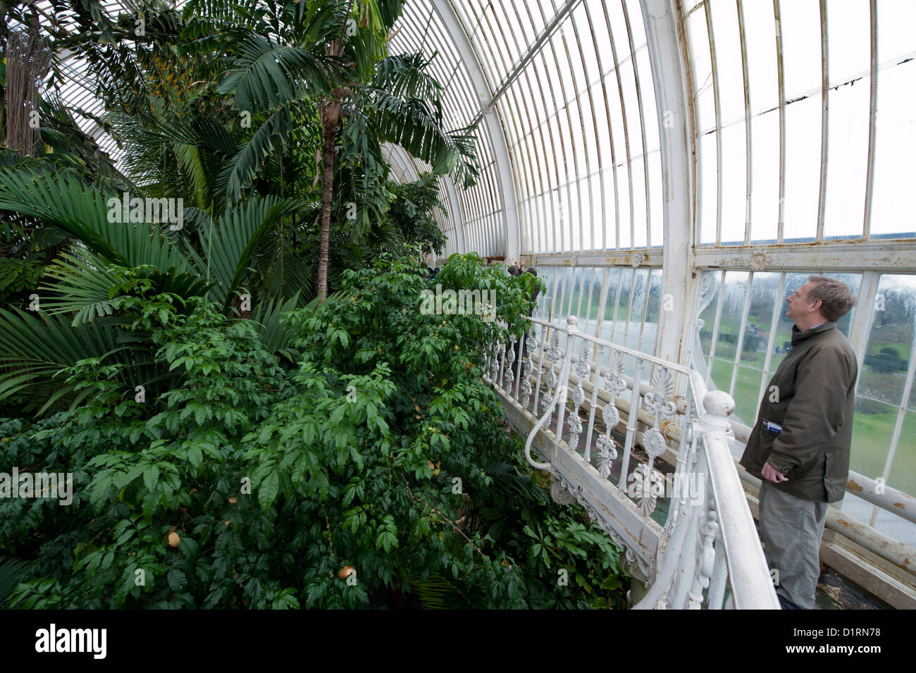 The Palm House, the huge gl house for humid tropical ... Rainforest House Plant on india house plants, prairie house plants, butterfly house plants, blue house plants, alpine house plants, live house plants, alaska house plants, mangrove house plants, black house plants, coffee house plants, forest house plants, tropical house plants, river house plants, lake house plants, jungle house plants, photography house plants, sunset house plants, beach house plants, organic house plants, eucalyptus house plants,