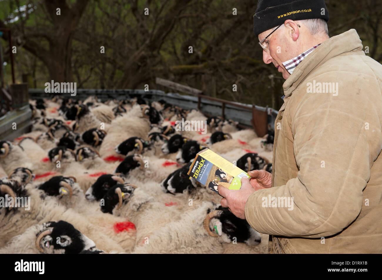 Farmer reading instructions on animal medicine packet. - Stock Image