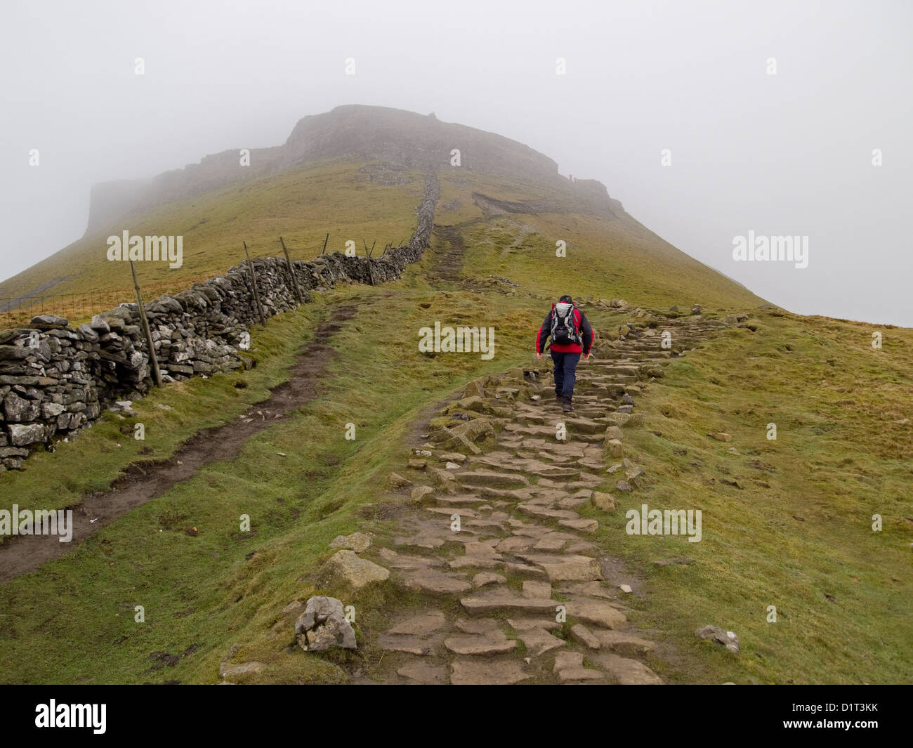 A walker heading up Pen-y-ghent in the Yorkshire Dales - Stock Image