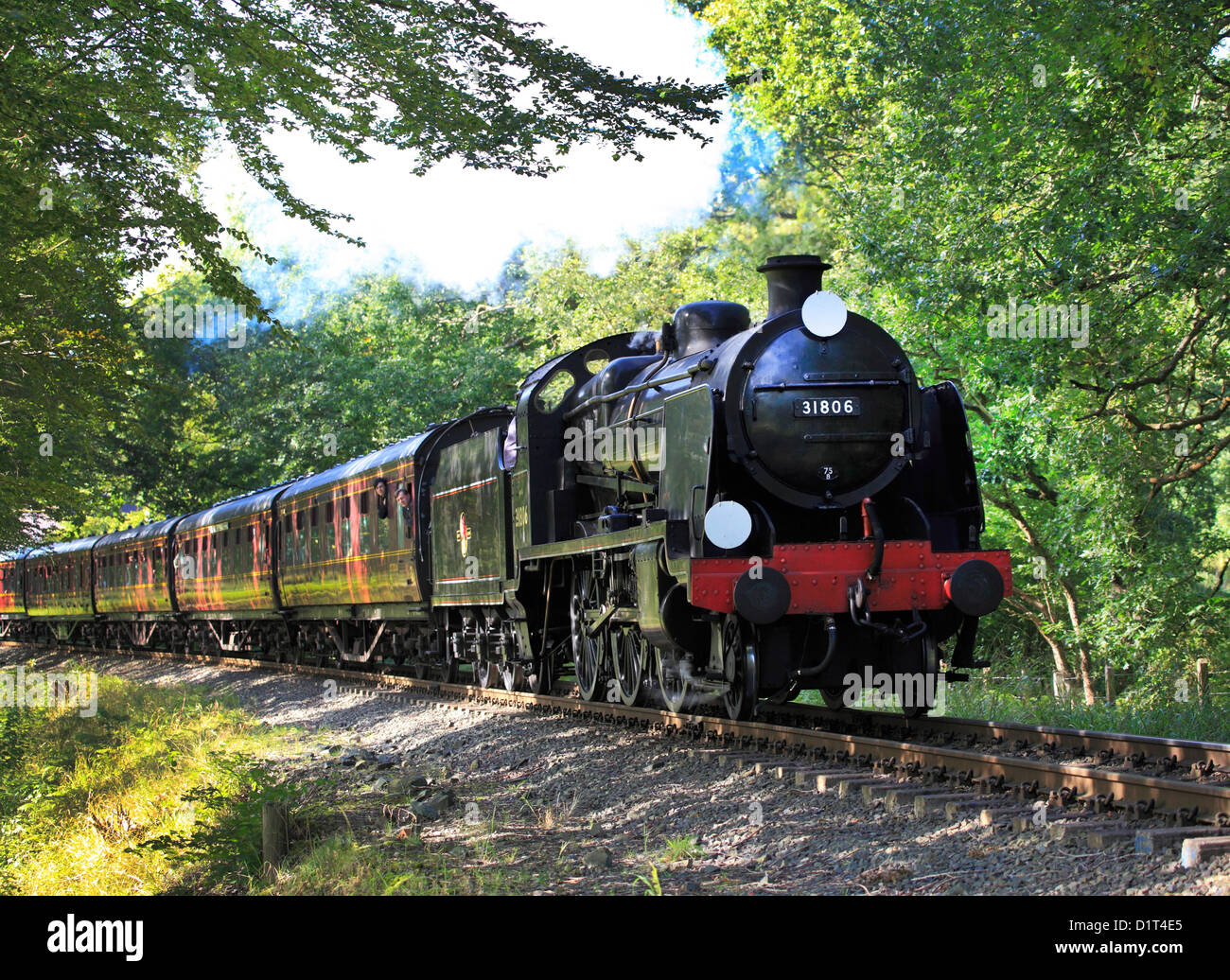 Southern Railway maunsell 'U' class 2-6-0 No. 31806 steams through Trimpley crossing on the Severn Valley - Stock Image