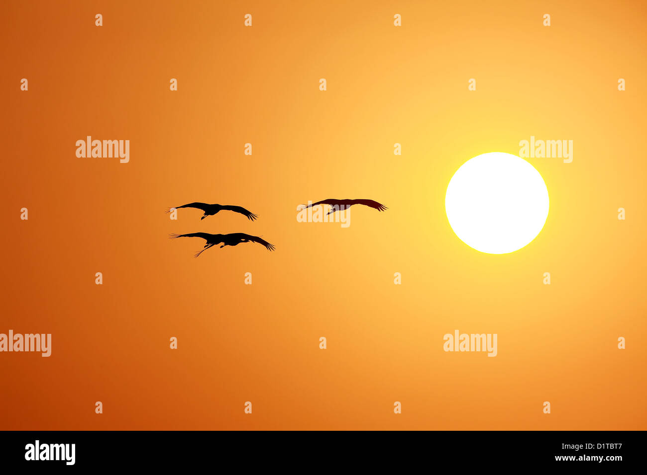 Sunset time - Stock Image