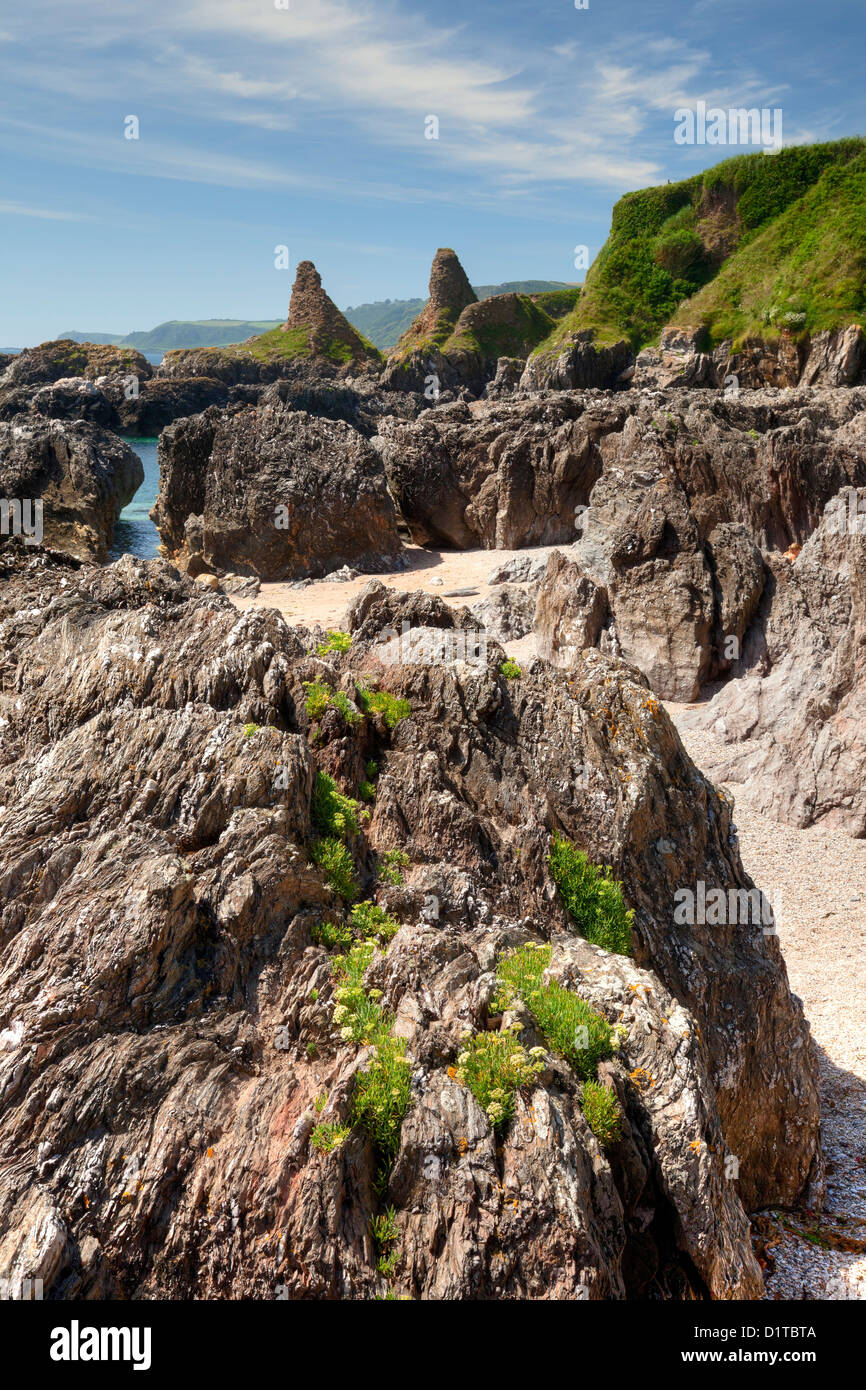 Wild flowers and rock formations, Great Mattiscombe Sand, Devon, England - Stock Image