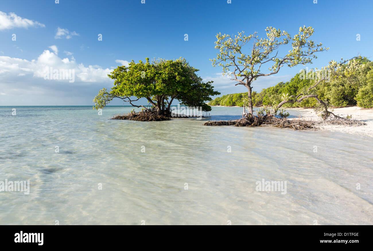Florida beach, Anne's Beach in the Florida Keys, USA - Stock Image