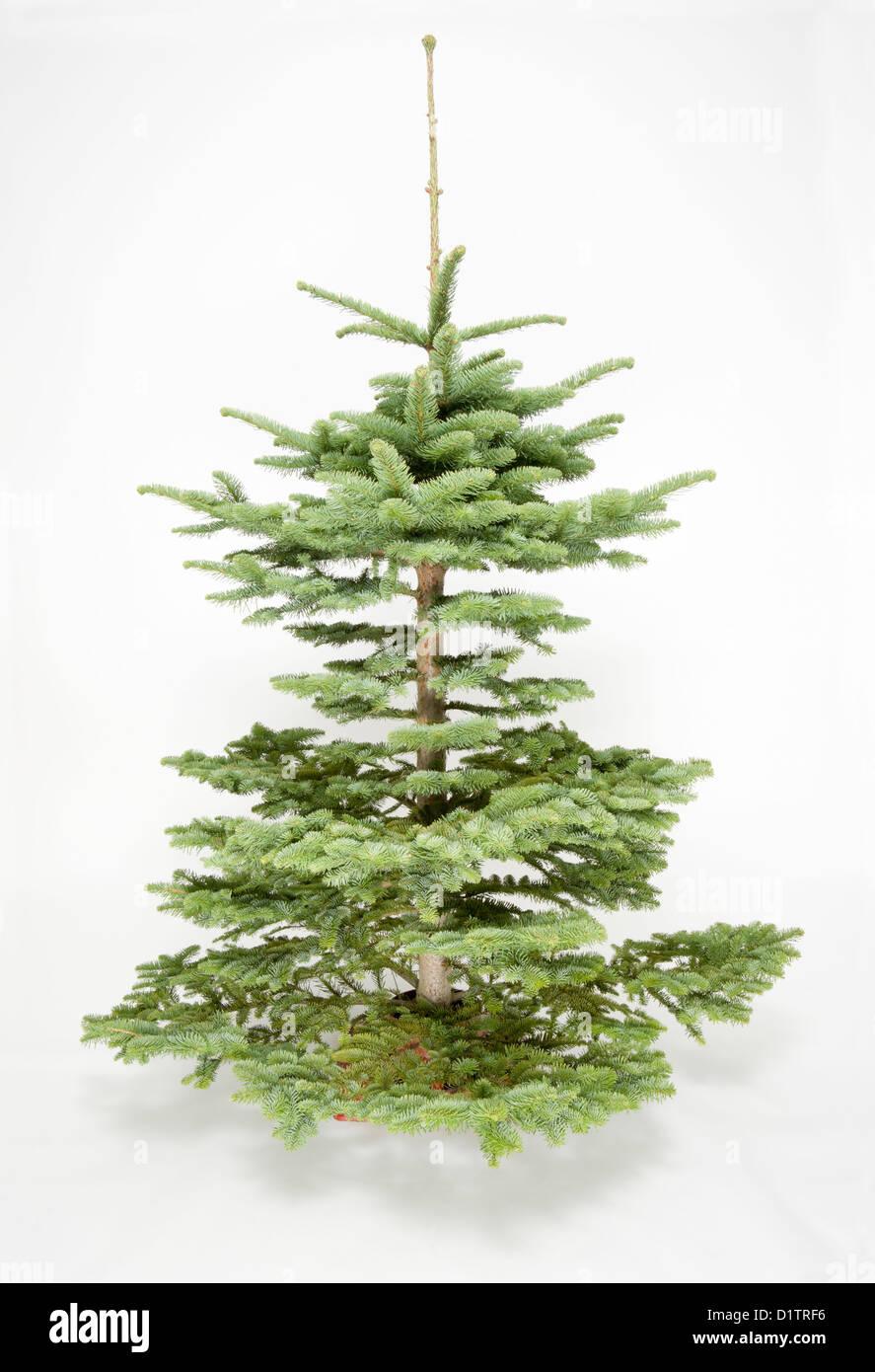 plain undecorated christmas tree Stock Photo: 52791066 - Alamy