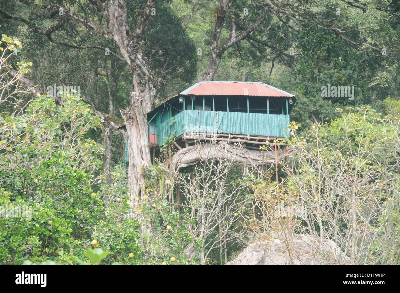 Tree houses, treehouses, or tree forts. Munnar Kerala India - Stock Image