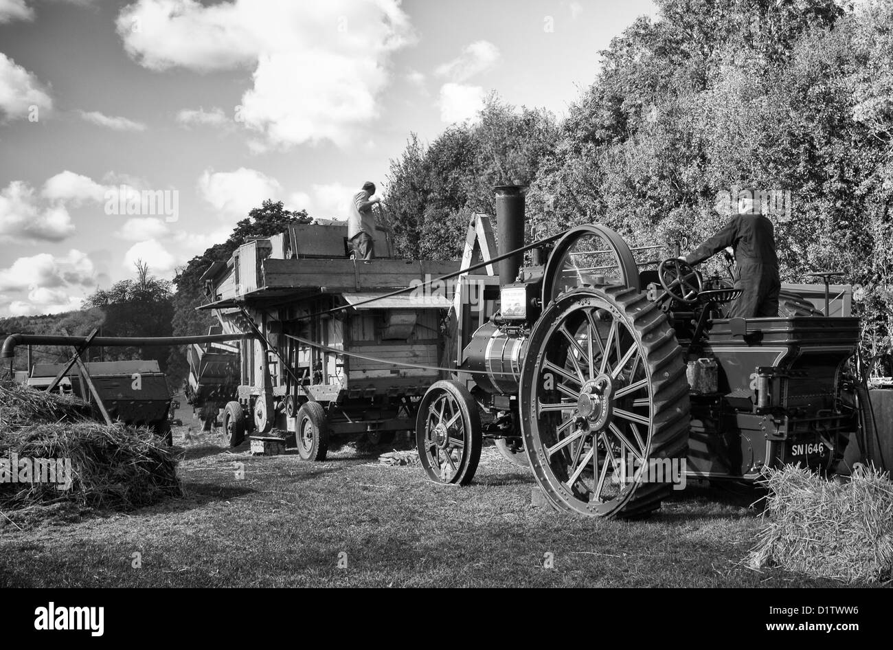 Threshing the old fashioned way, at the Singleton Weald and Downland open air museum, near Chichester, West Sussex - Stock Image