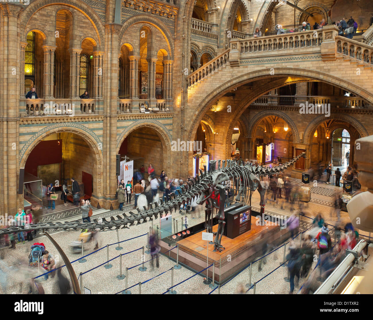 The Natural History Museum, London. - Stock Image