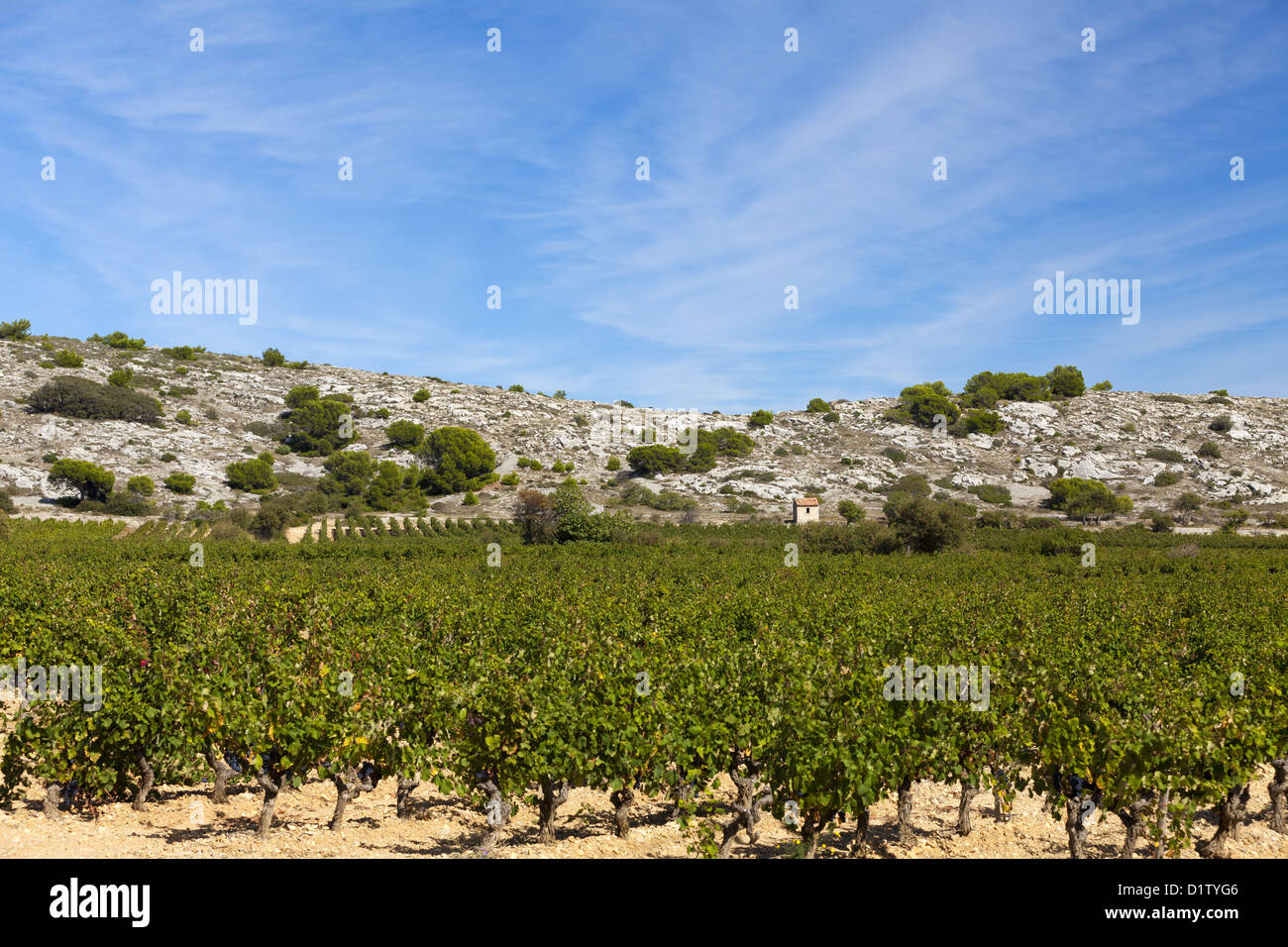 Vineyards of the winegrowers St. Martin in Gruissan in southern France - Stock Image