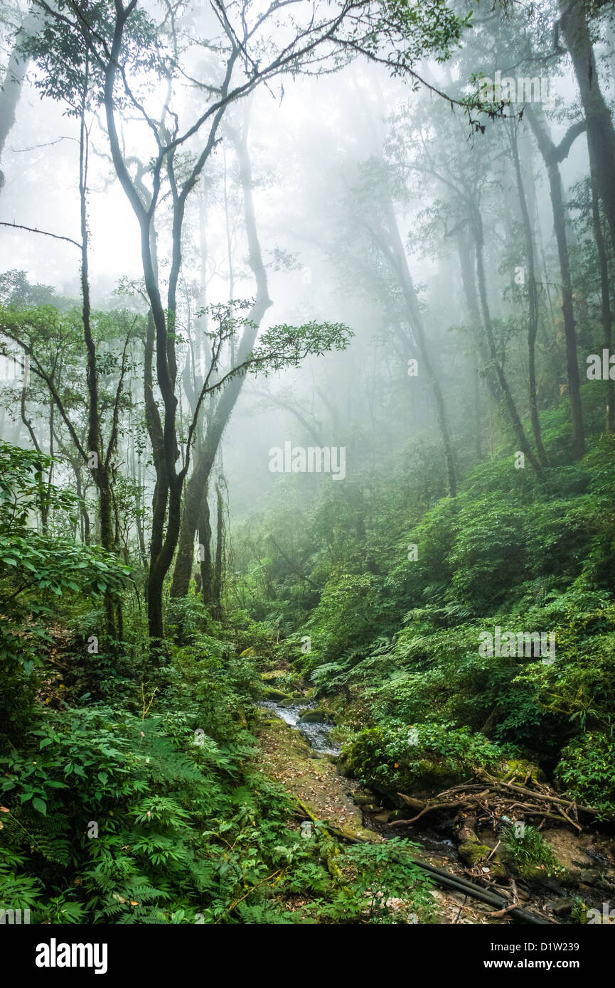 The beautiful scene of tropical rain forest at Doi Inthanon National Park, Thailand. - Stock Image