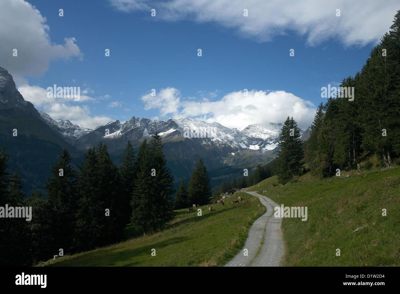 Elm Switzerland Stock Photos Elm Switzerland Stock Images Alamy