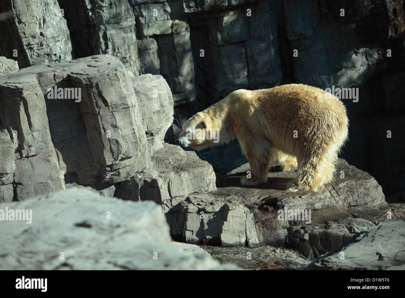 bear dating new york city