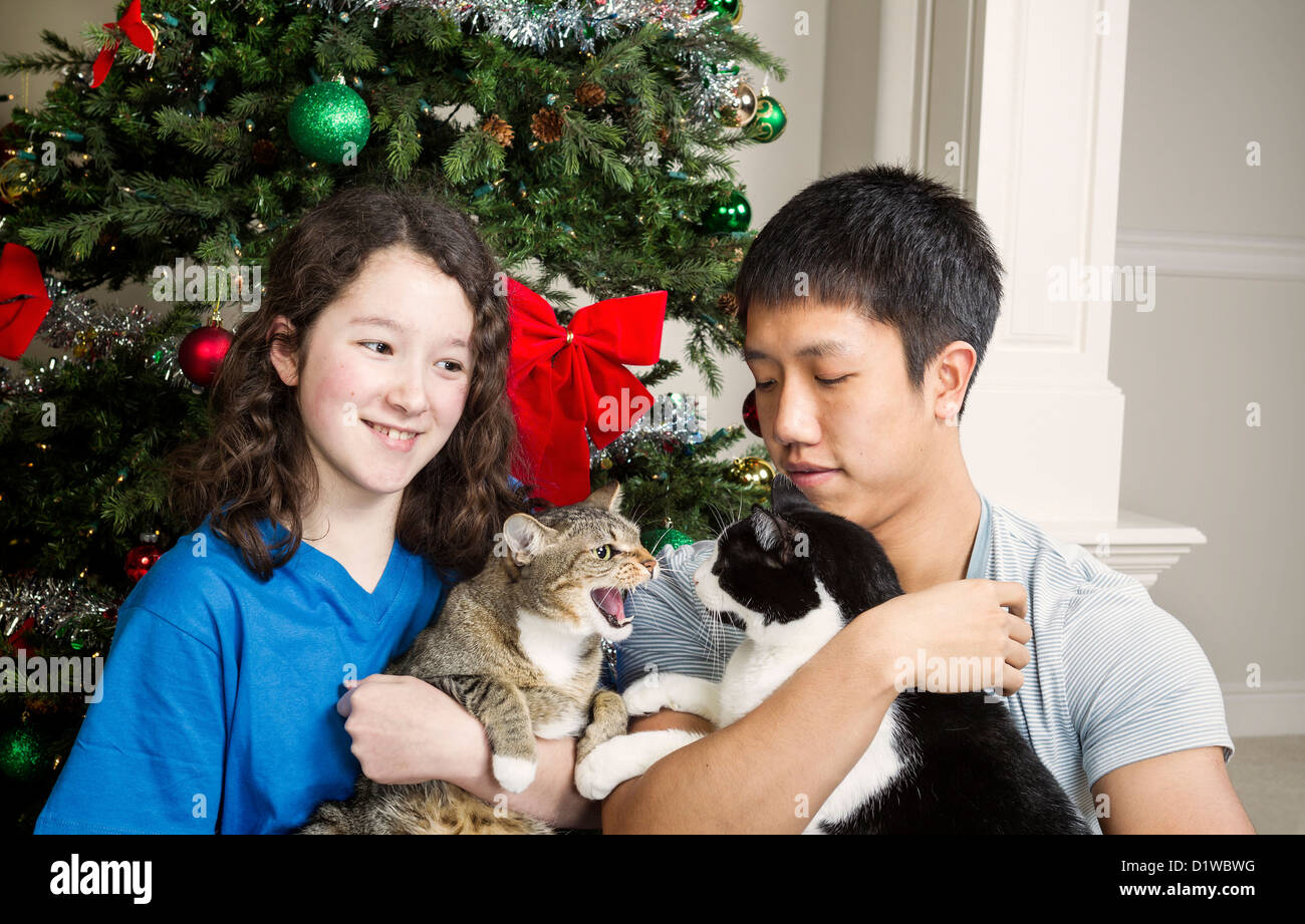 Family cat snarls at other family members during holiday season with Christmas tree in background - Stock Image
