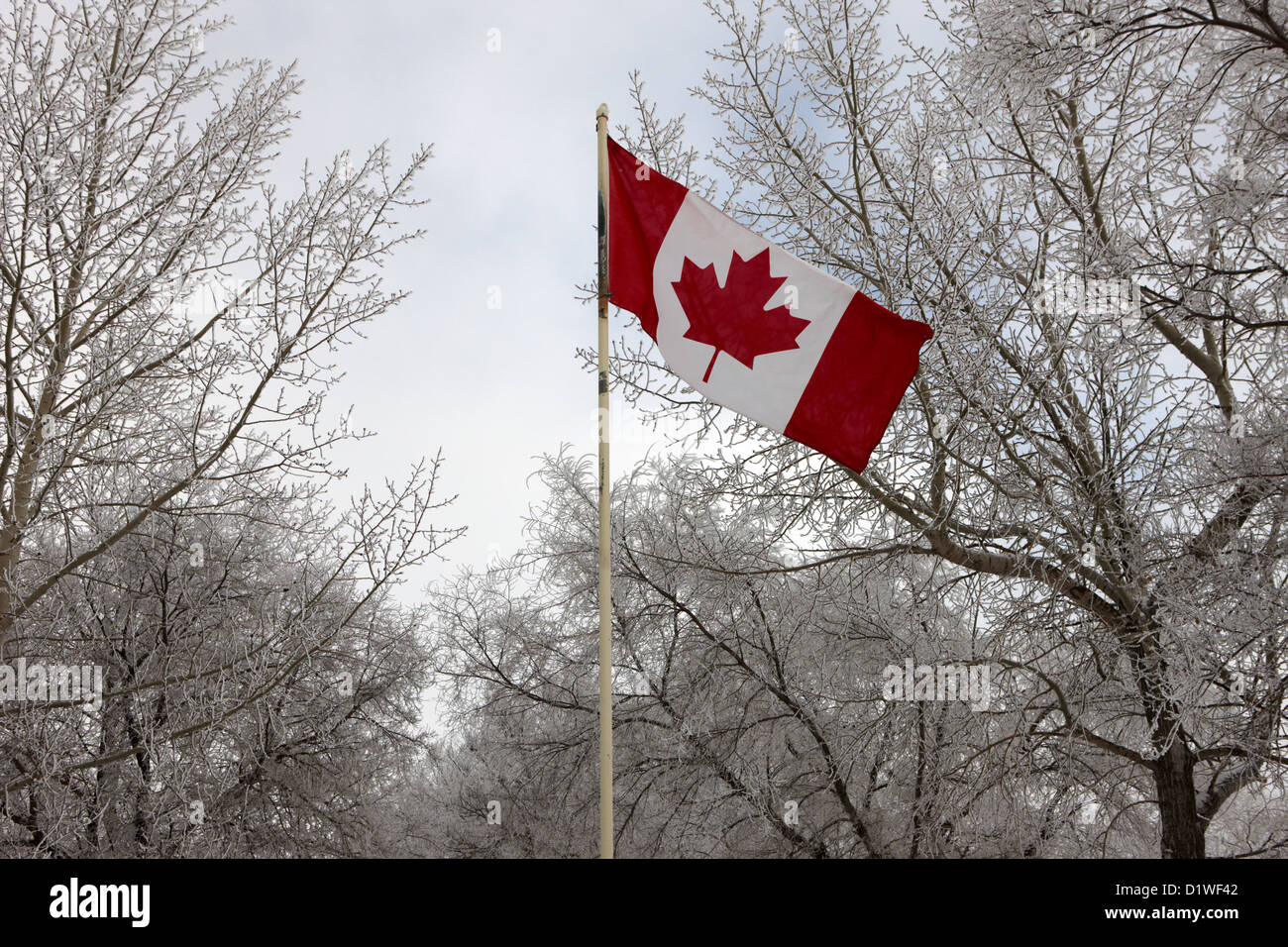 canadian flag flying with frost covered trees Forget Saskatchewan Canada - Stock Image