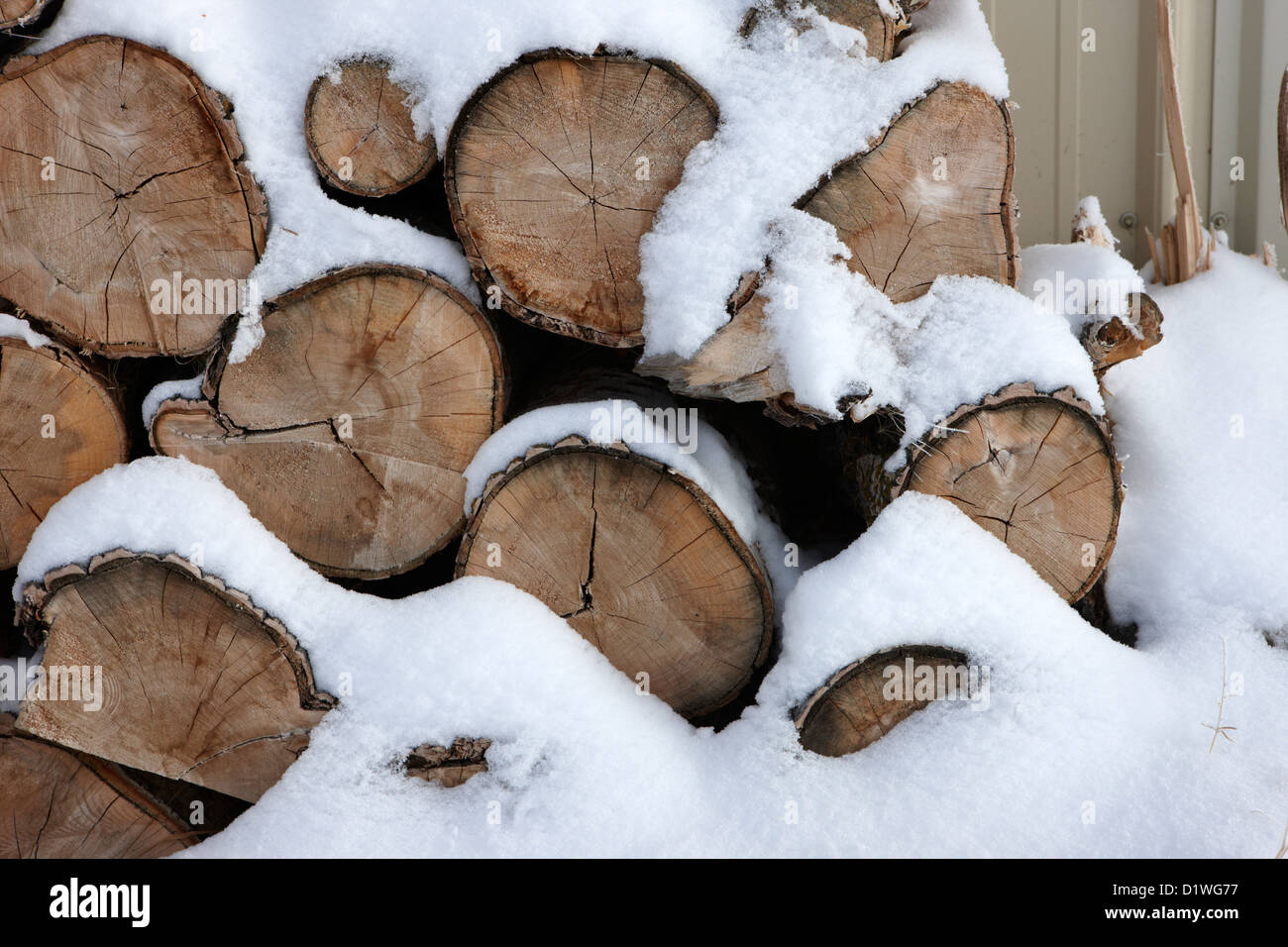 pile of logs covered in snow in Forget Saskatchewan Canada - Stock Image