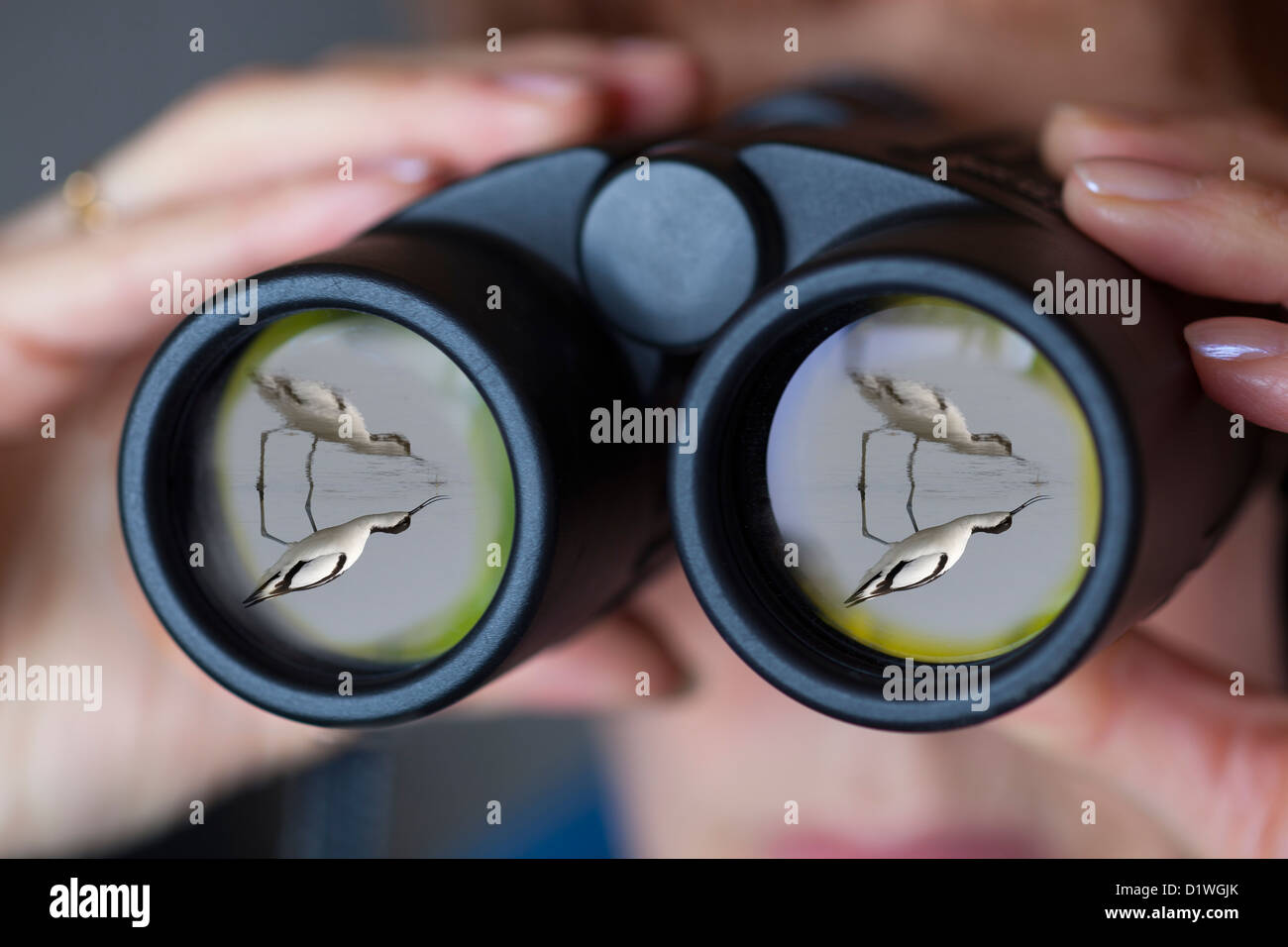 Binoculars being used by birdwatcher avocet reflected in front optic - Stock Image