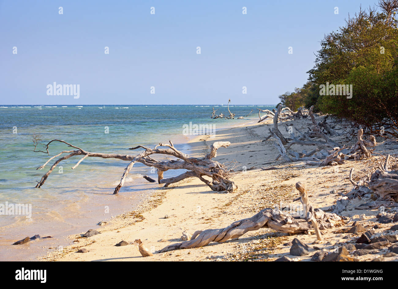 Wild tropical beach littered with driftwood. Indonesia, Gili island. - Stock Image