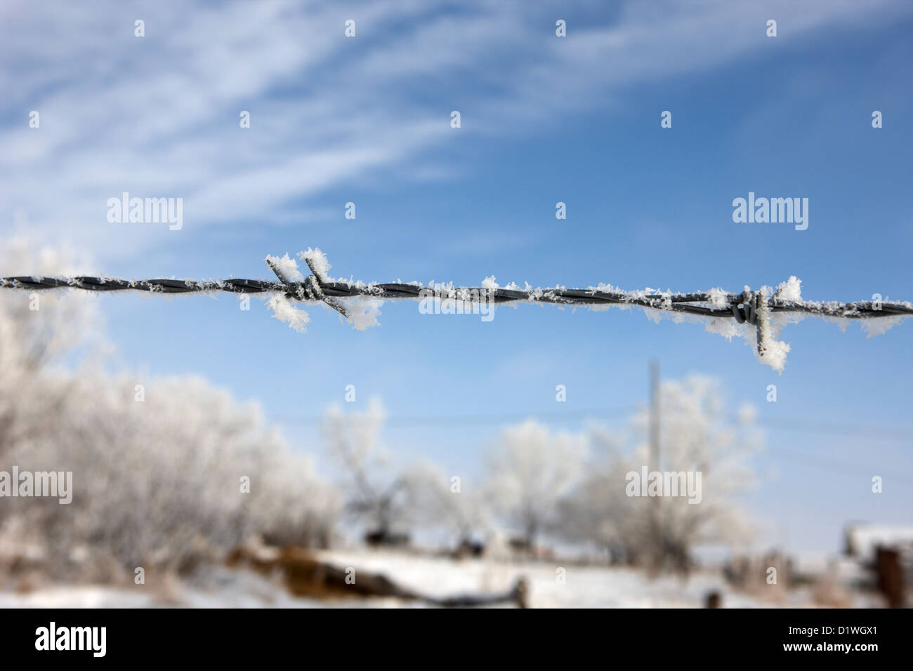 hoar frost on barbed wire fence on farmland in Forget Saskatchewan Canada - Stock Image