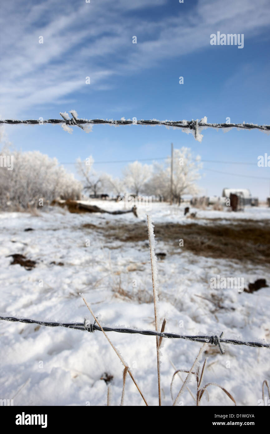 hoar frost on barbed wire fence on farmland in Forget Saskatchewan Canada Stock Photo