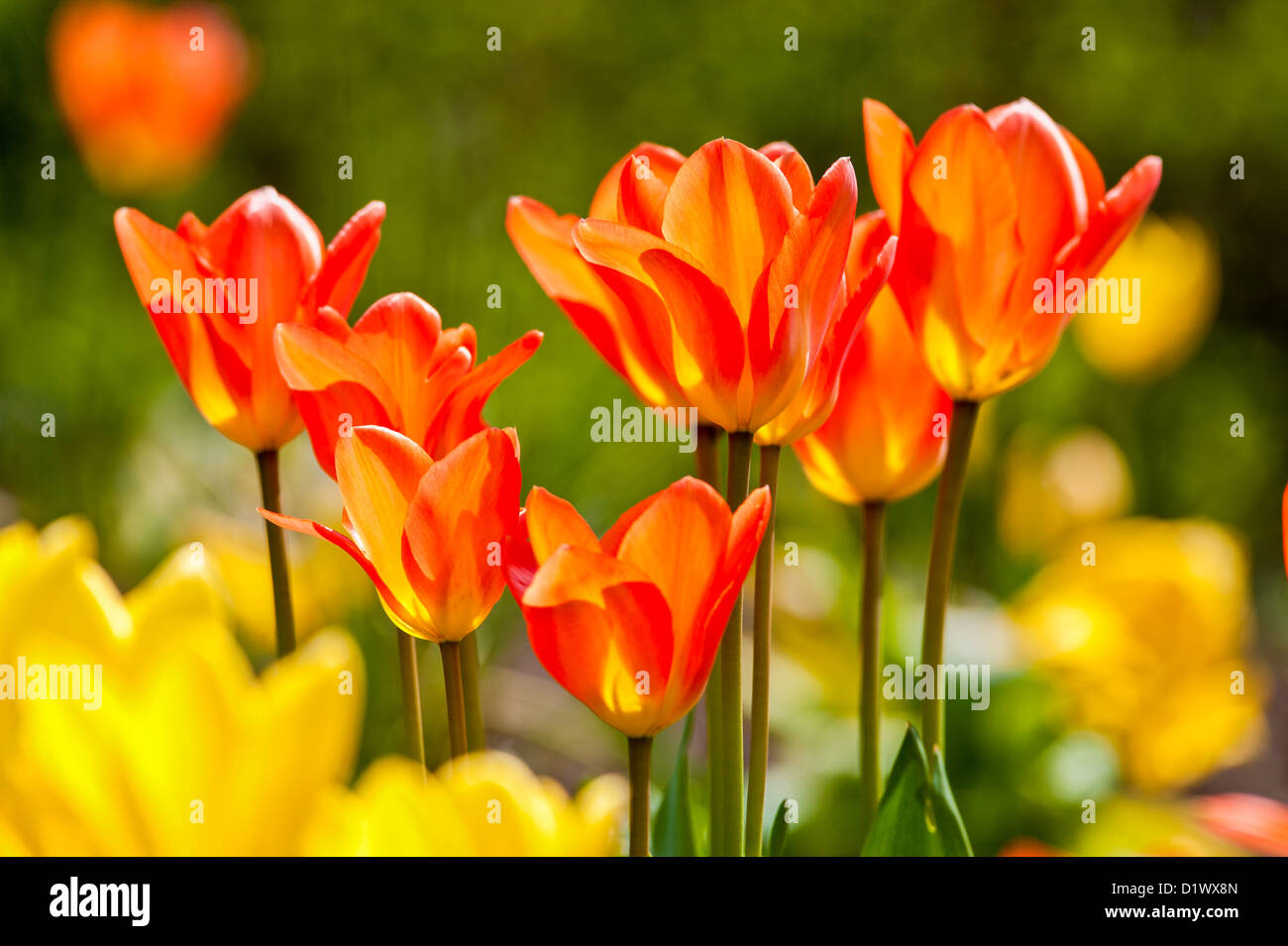 Easter Flowers Stock Photos Easter Flowers Stock Images Alamy