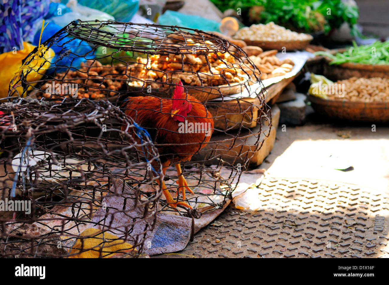 Chicken in Wire Cage. Hoi An Market, Vietnam, Asia - Stock Image