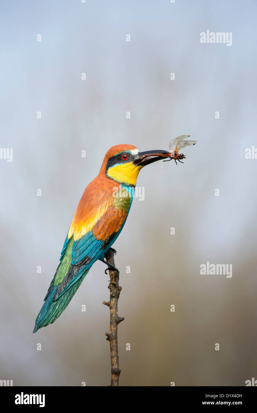 Carving of a Bee Eater by Mike Wood; UK - Stock Image