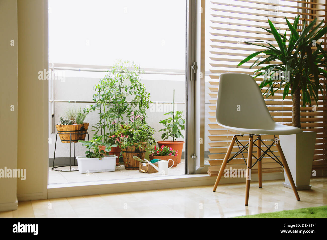 Potted plants on a balcony seen from the living room - Stock Image
