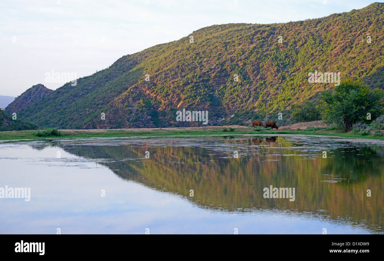 Farm dam with reflections in Swartberg mountains, Klein Karoo, South Africa - Stock Image