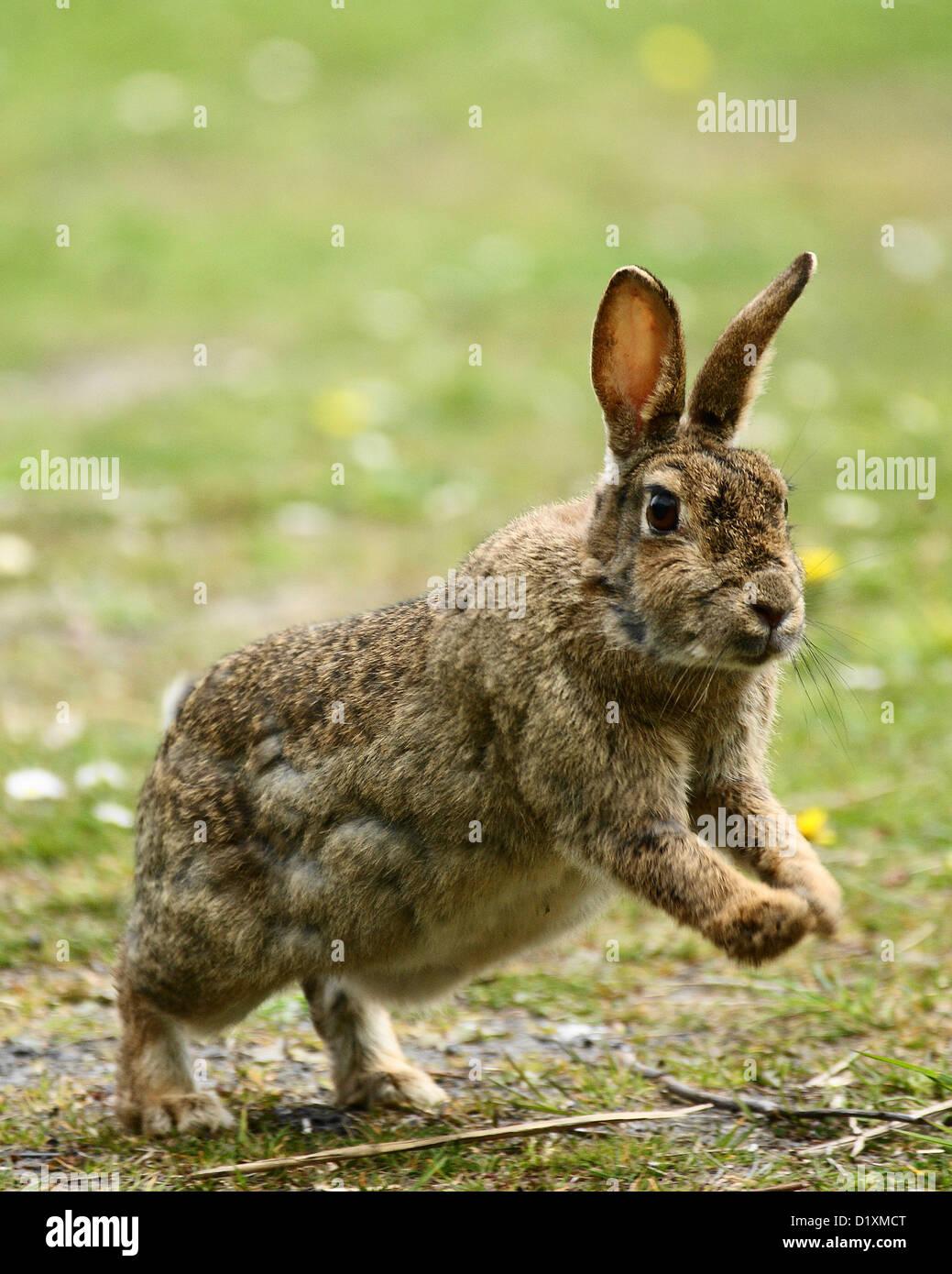 Wild bunnies dating site