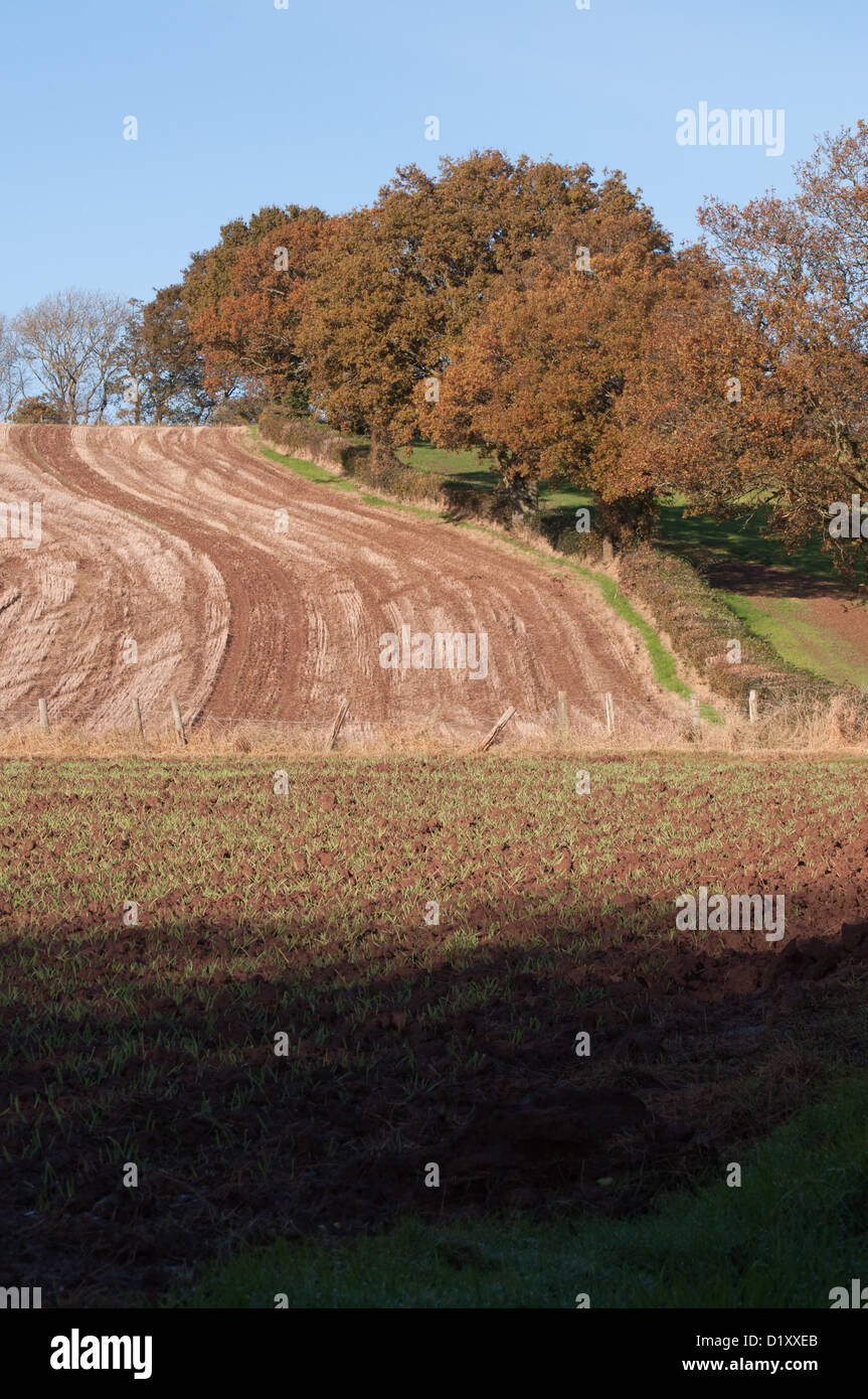 ploughed field, Autumn, furrows, landscape, trees, hedgerows, pastoral - Stock Image