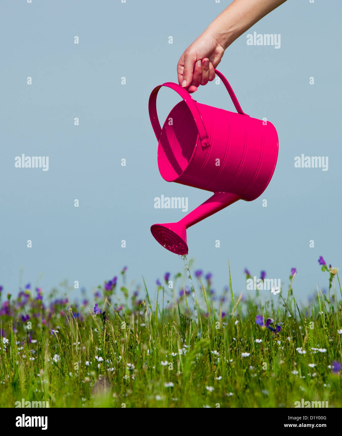 Female hand holding a water can and watering the flowers - Stock Image