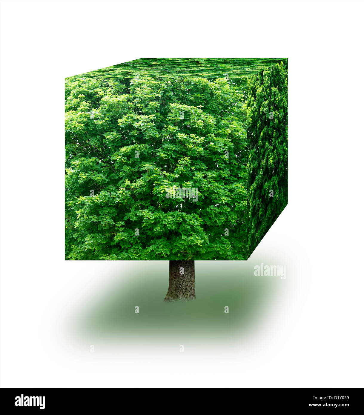 Cube made from a tree against a white background - Stock Image