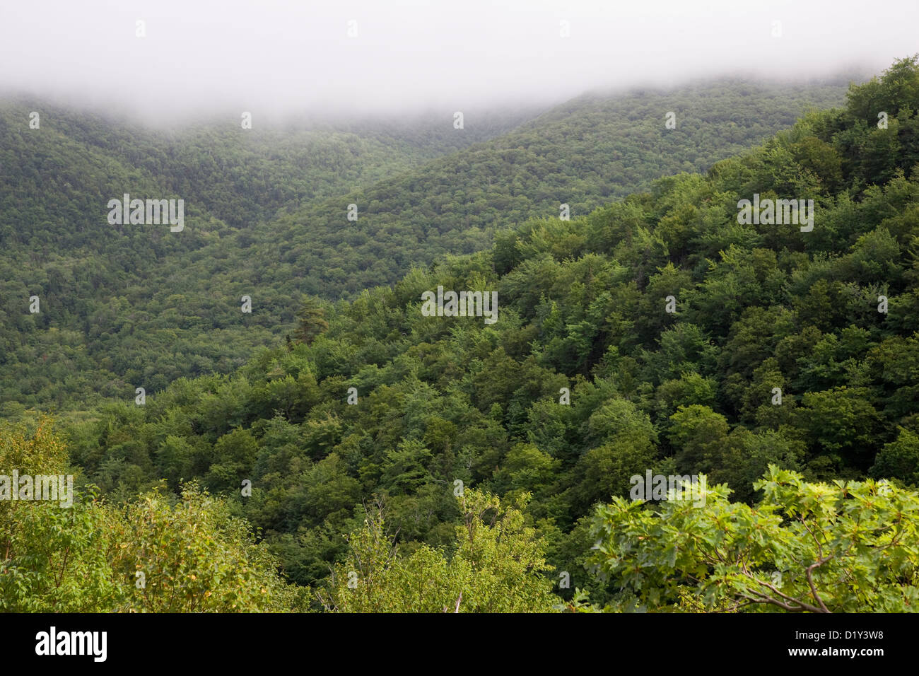River valley with low mist descending on the Cabot Trail, Cape Breton, Nova Scotia - Stock Image