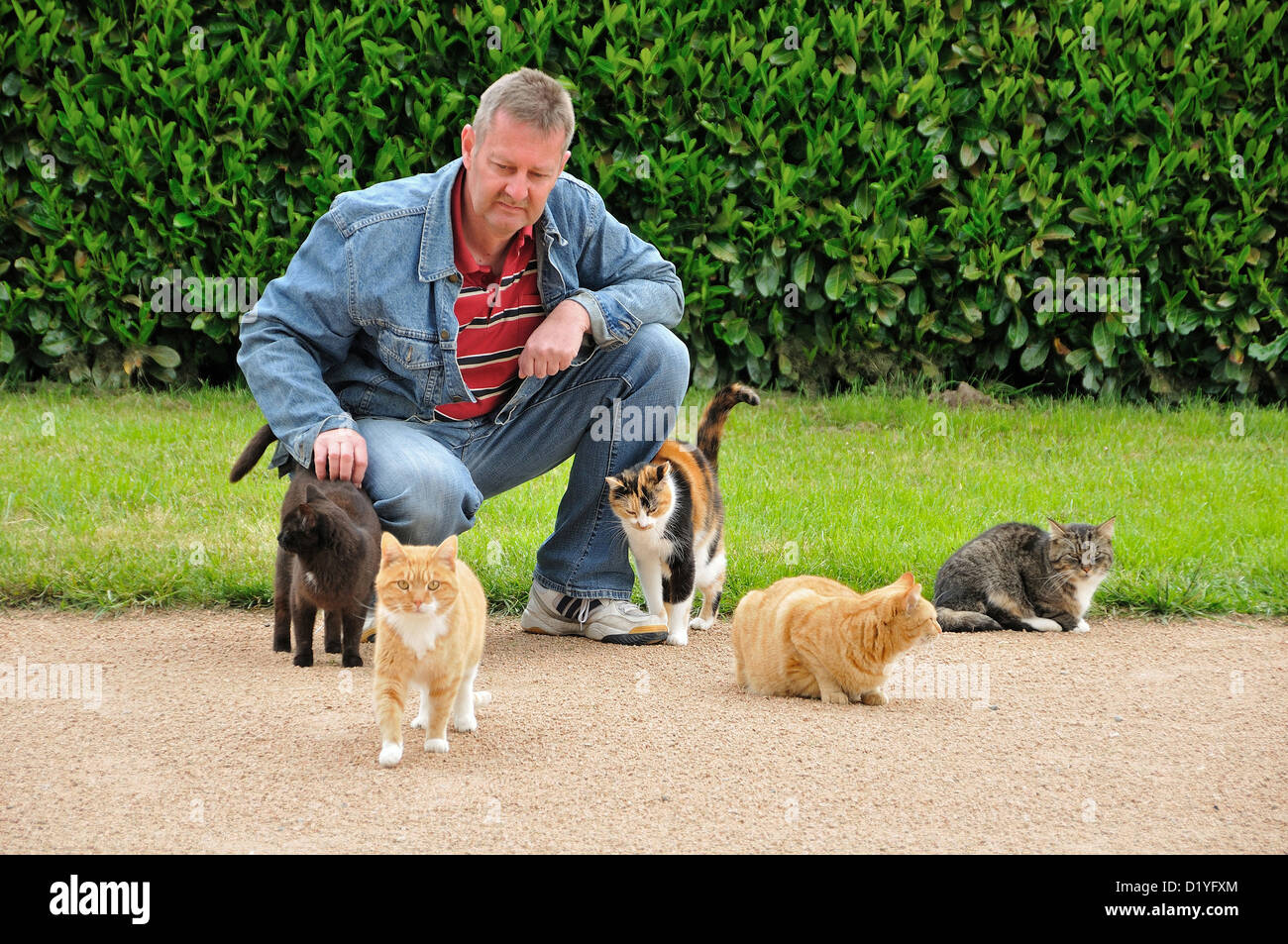 Domestic Cat. Five adults wheedling a man in a park - Stock Image