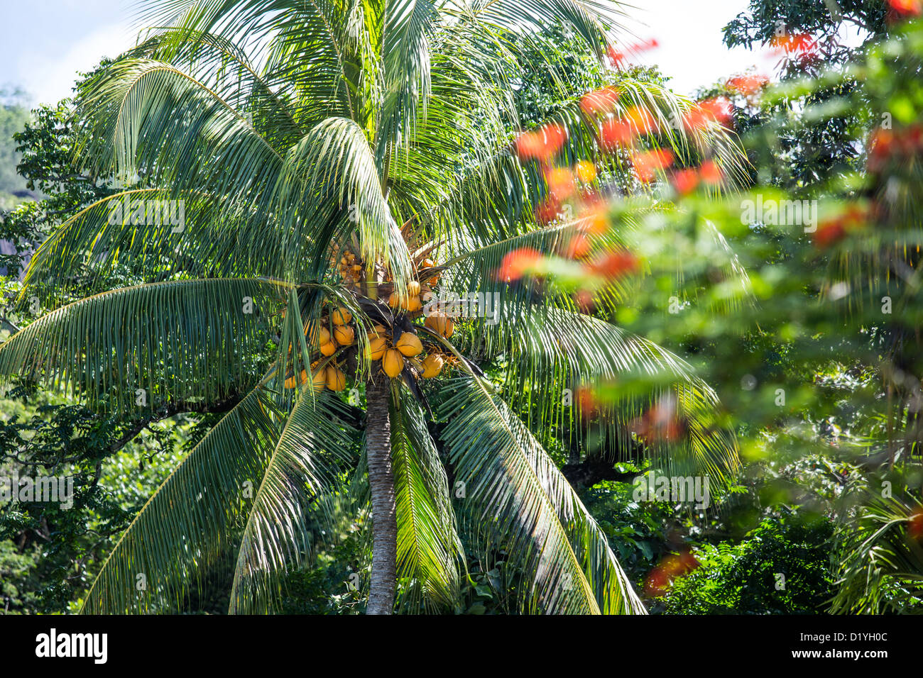 Mahe Island, Seychelles - Stock Image