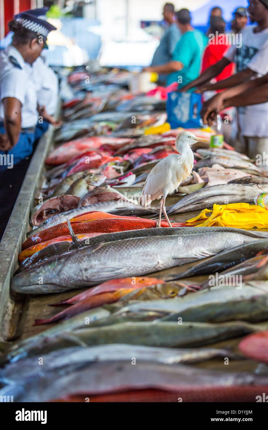 Victoria fish market, Mahe Island, Seychelles - Stock Image