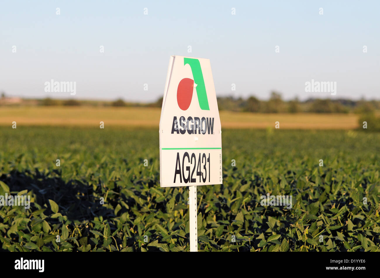 Agriculture Asgrow AG2431 seed sign rests by a field of soybeans on an Illinois farm. USA. - Stock Image