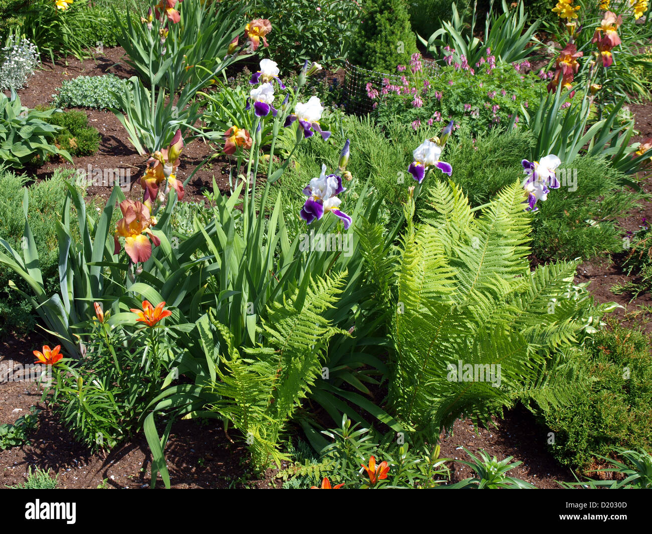 Flower bed with different kinds of flowers ferns crocuses lilies flower bed with different kinds of flowers ferns crocuses lilies izmirmasajfo
