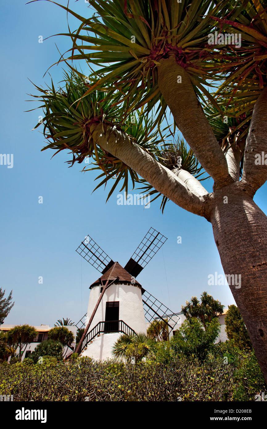 Windmill at the Pueblo Majarero, Museo Molino, Antigua, Fuerteventura, Canary Islands, Spain - Stock Image