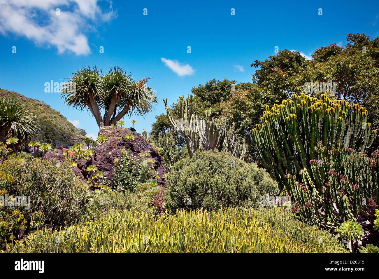 Jardin Canario, Tafira, Gran Canaria, Canary Islands, Spain - Stock Image