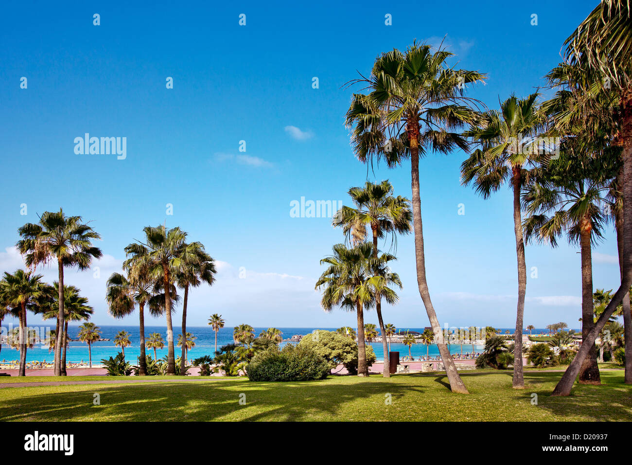 View of palm trees and ocean, Playa Amadores, Puerto Rico, Gran Canaria, Canary Islands, Spain, Europe - Stock Image