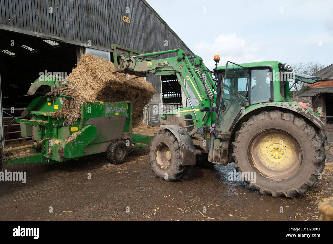 Loading bale of straw into straw chopper used to bed cattle pens. Northumberland, UK - Stock Image