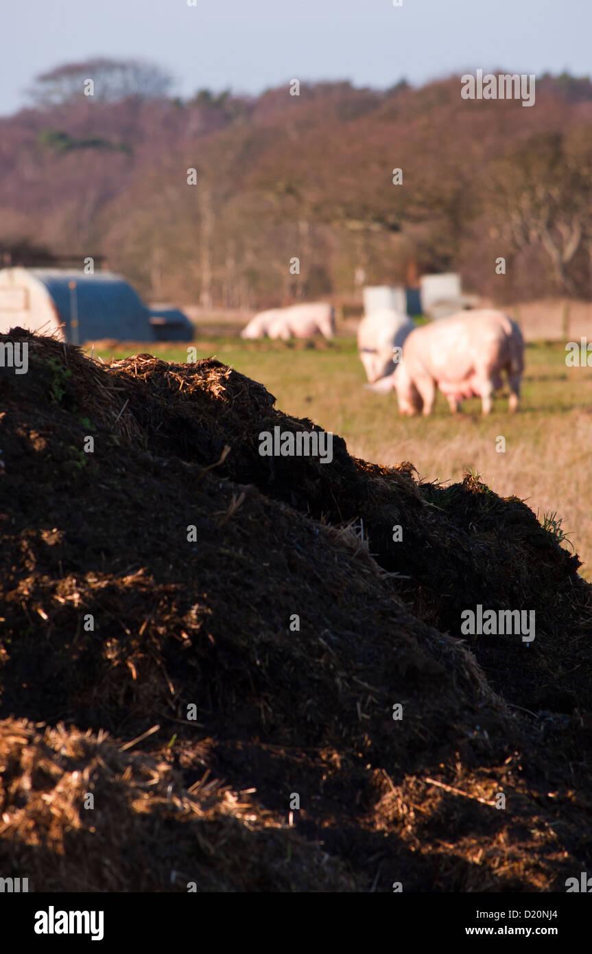 Pile of manure on pig farm Stock Photo