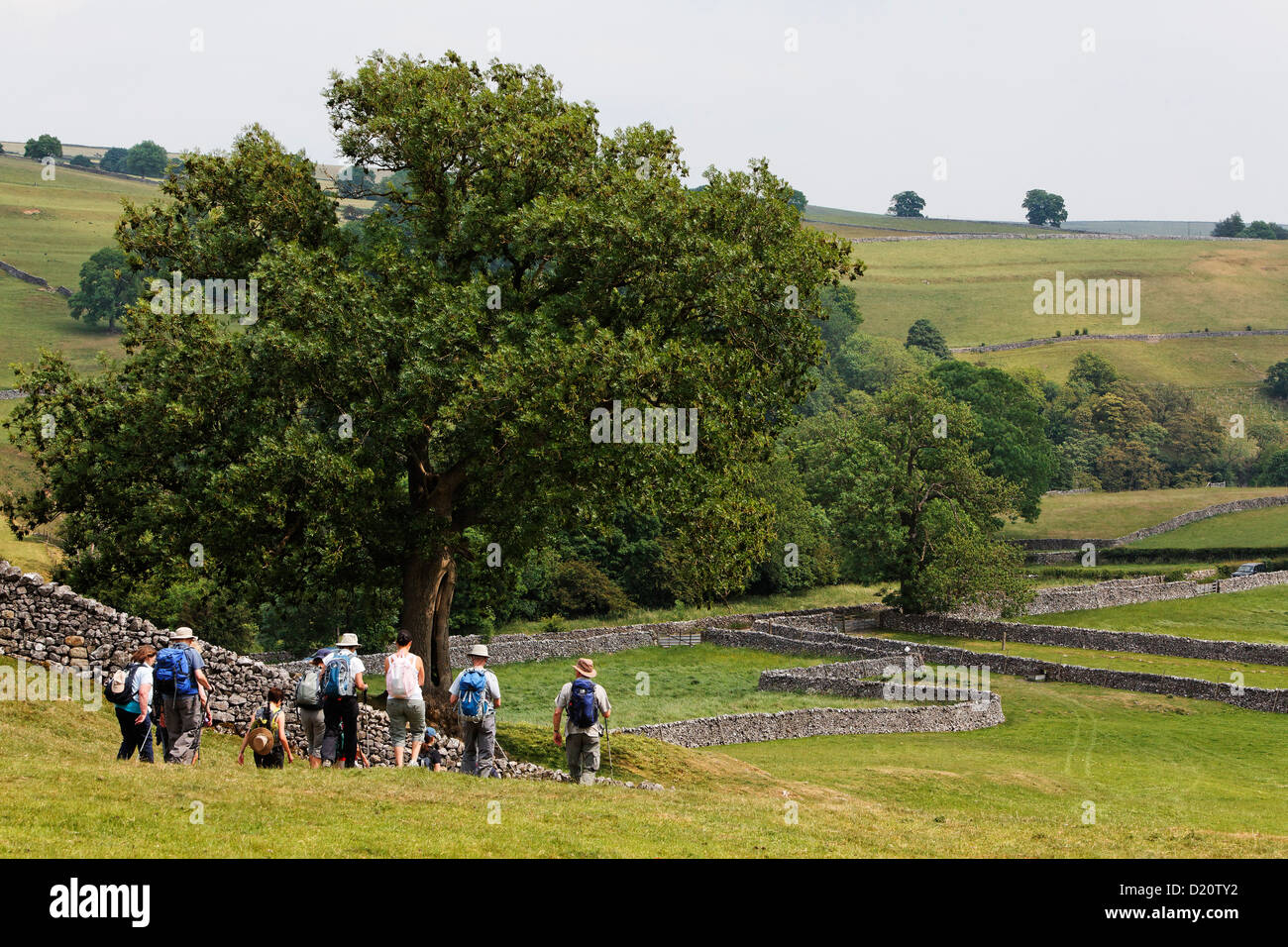 Hikers in Yorkshire Dales National Park, Yorkshire Dales, Yorkshire, England, Great Britain, Europe - Stock Image