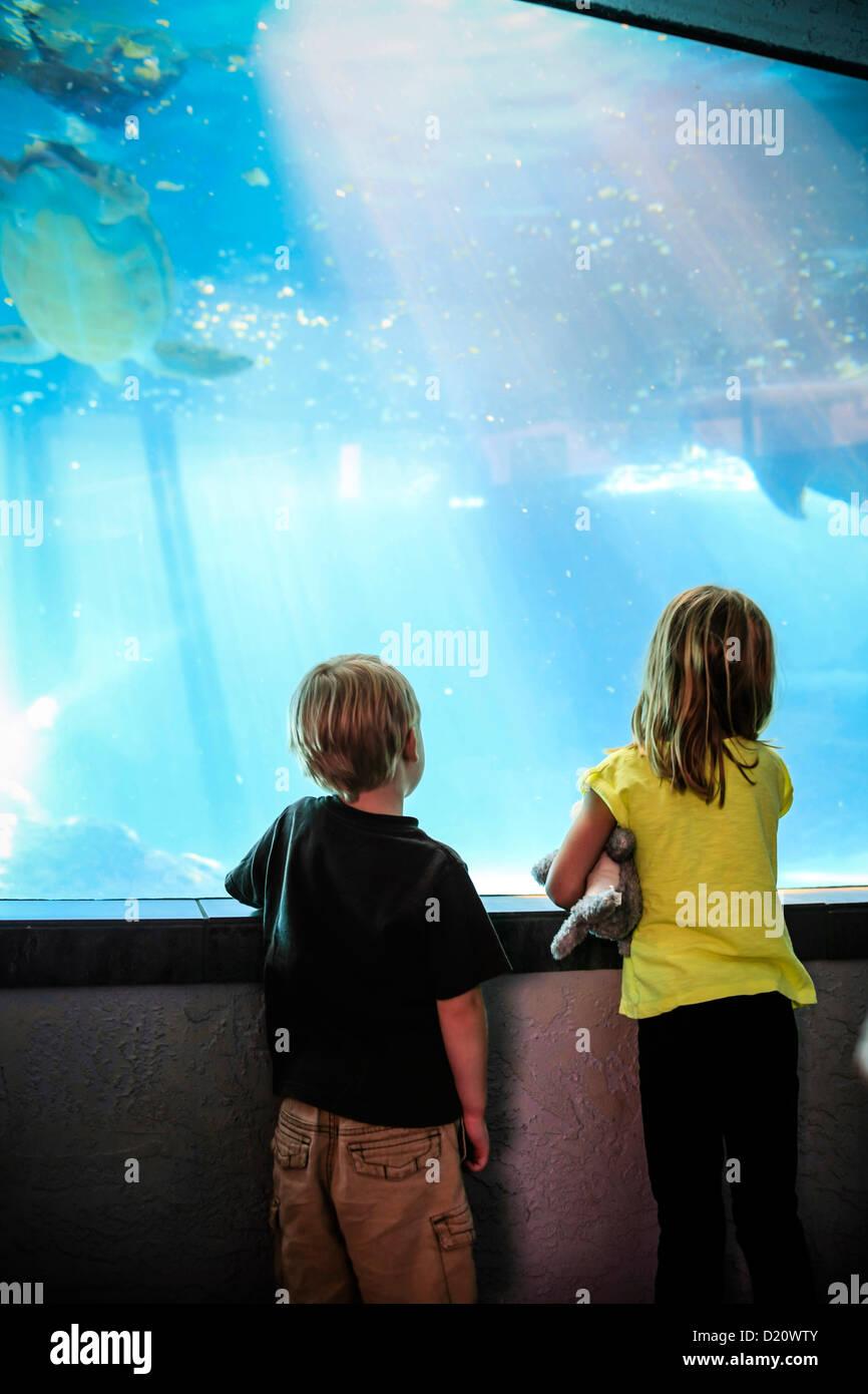Young children watch Manatee and turtles swim at the Sarasota MOTE Aquarium Florida Stock Photo
