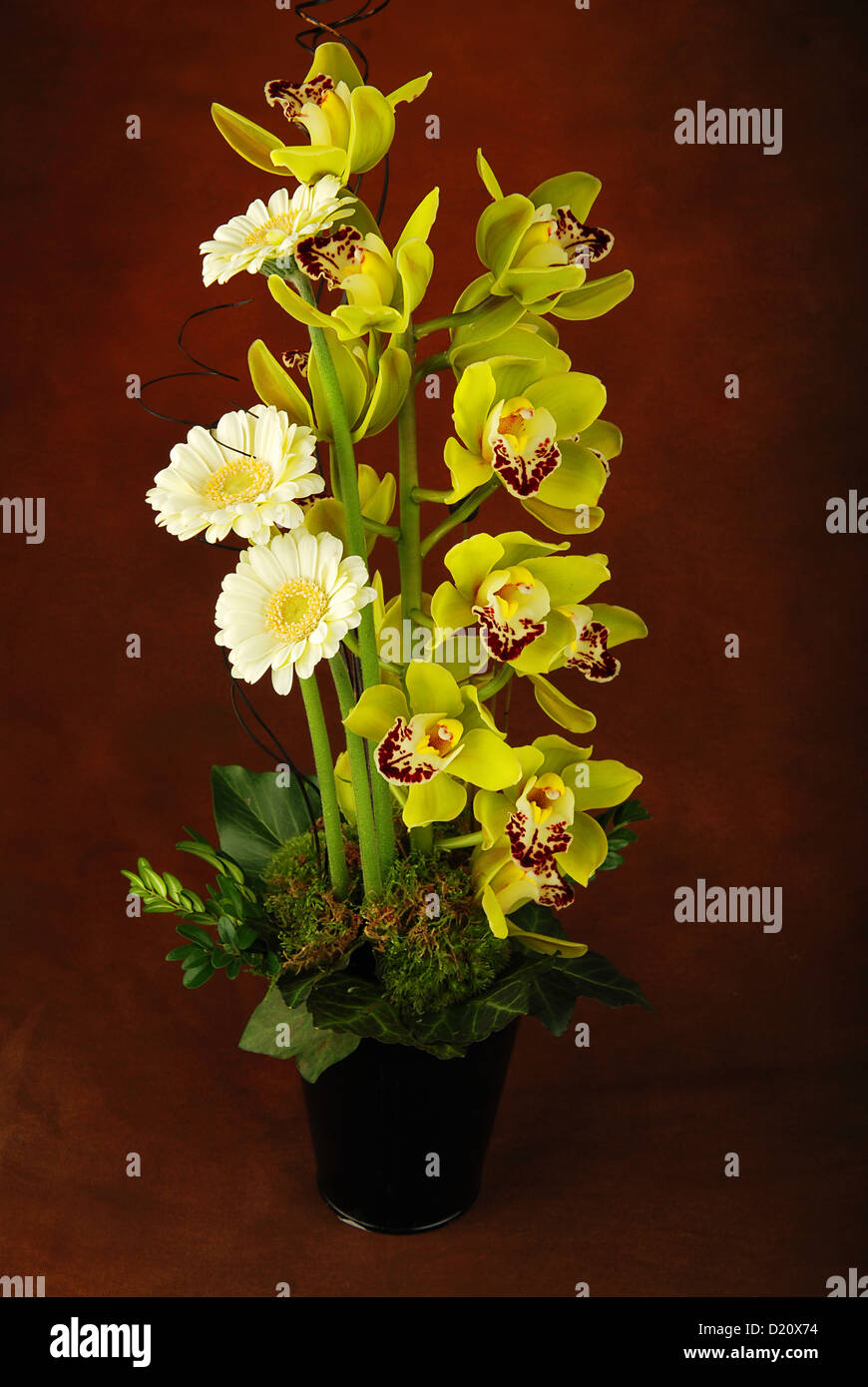 Brown And Yellow Living Room Decor: Brown And Yellow Orchid Stock Photos & Brown And Yellow