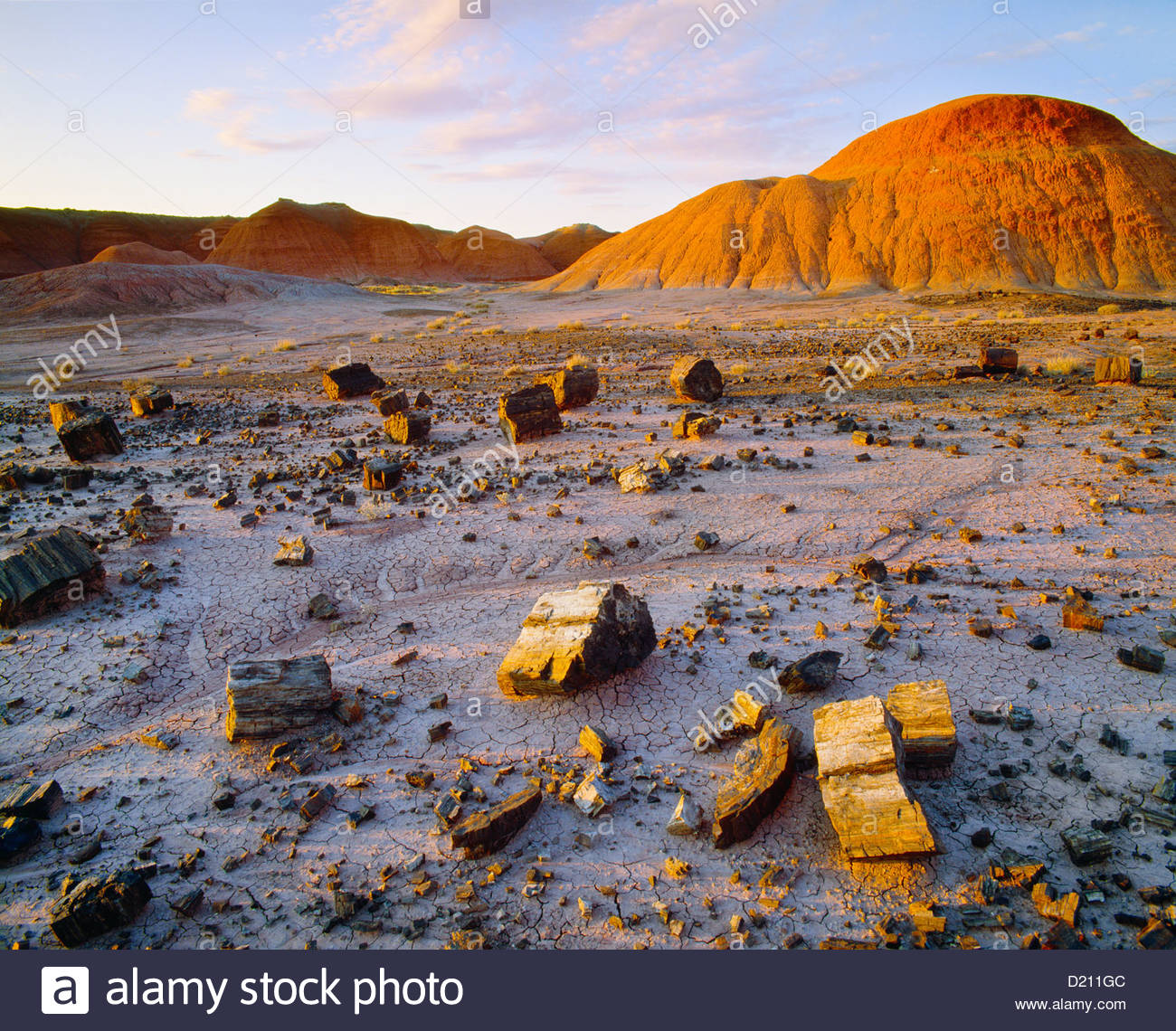 Pieces of petrified wood at the Black Forest, Painted Desert Wilderness Area. Petrified Forest National Park, Arizona. - Stock Image
