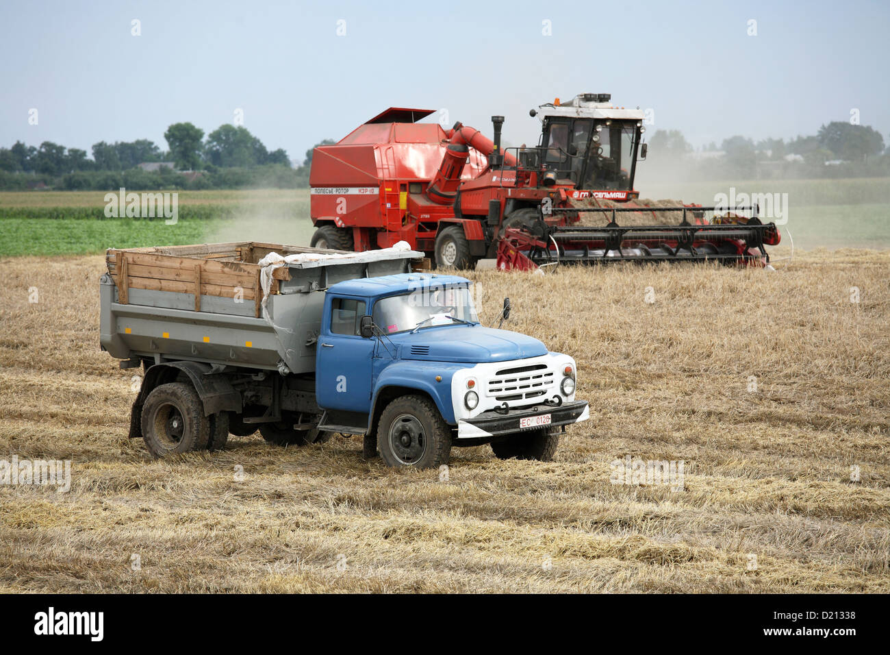 Gomel, Belarus, harvest in an area that was affected by the Chernobyl disaster in 1986 - Stock Image