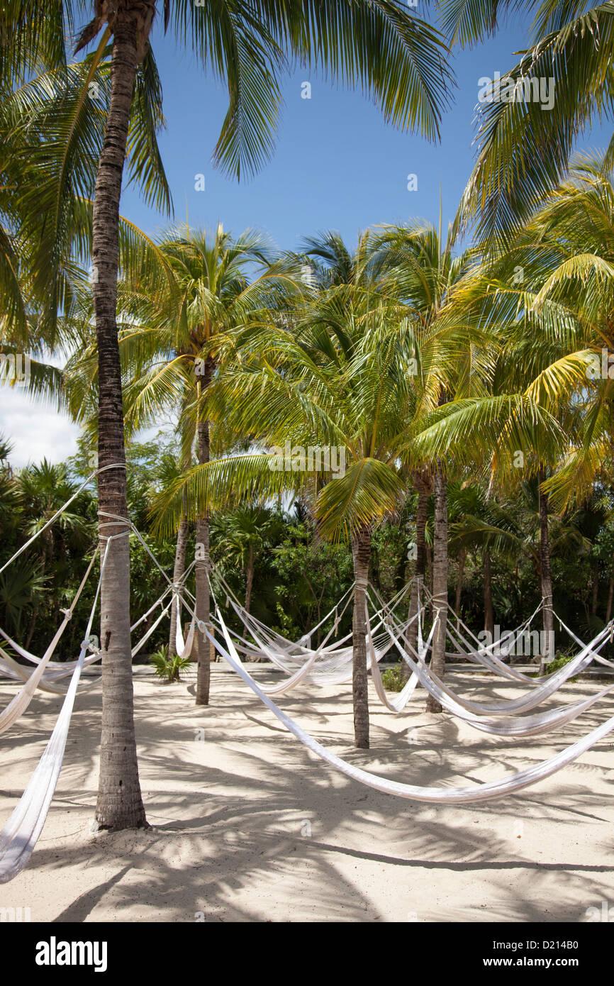 Hammocks hang from coconut trees at Xel-Ha Water Park, Tulum, Riviera Maya, Quintana Roo, Mexico - Stock Image