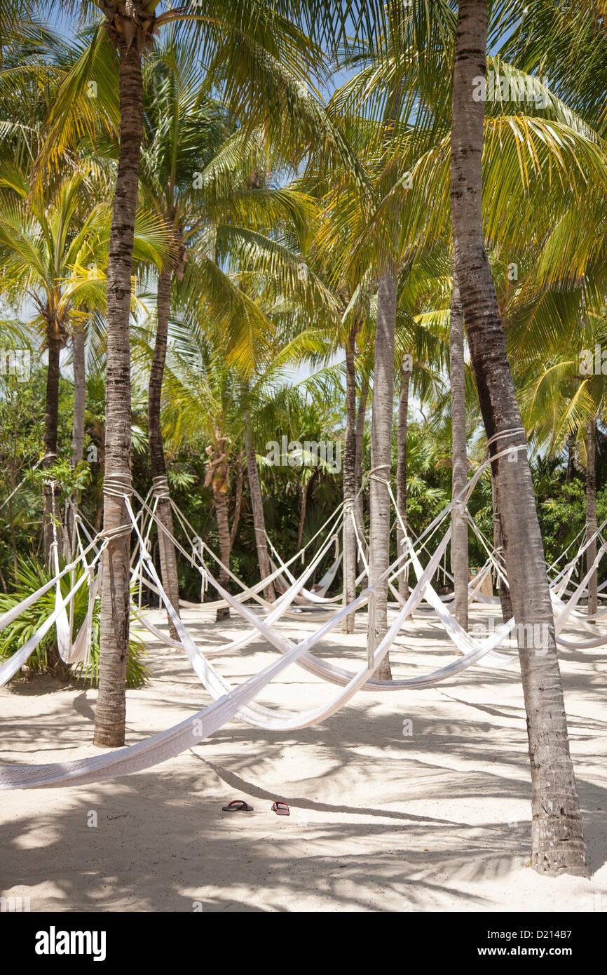 Hammocks hanging from coconut trees at Xel-Ha Water Park, Tulum, Riviera Maya, Quintana Roo, Mexico - Stock Image