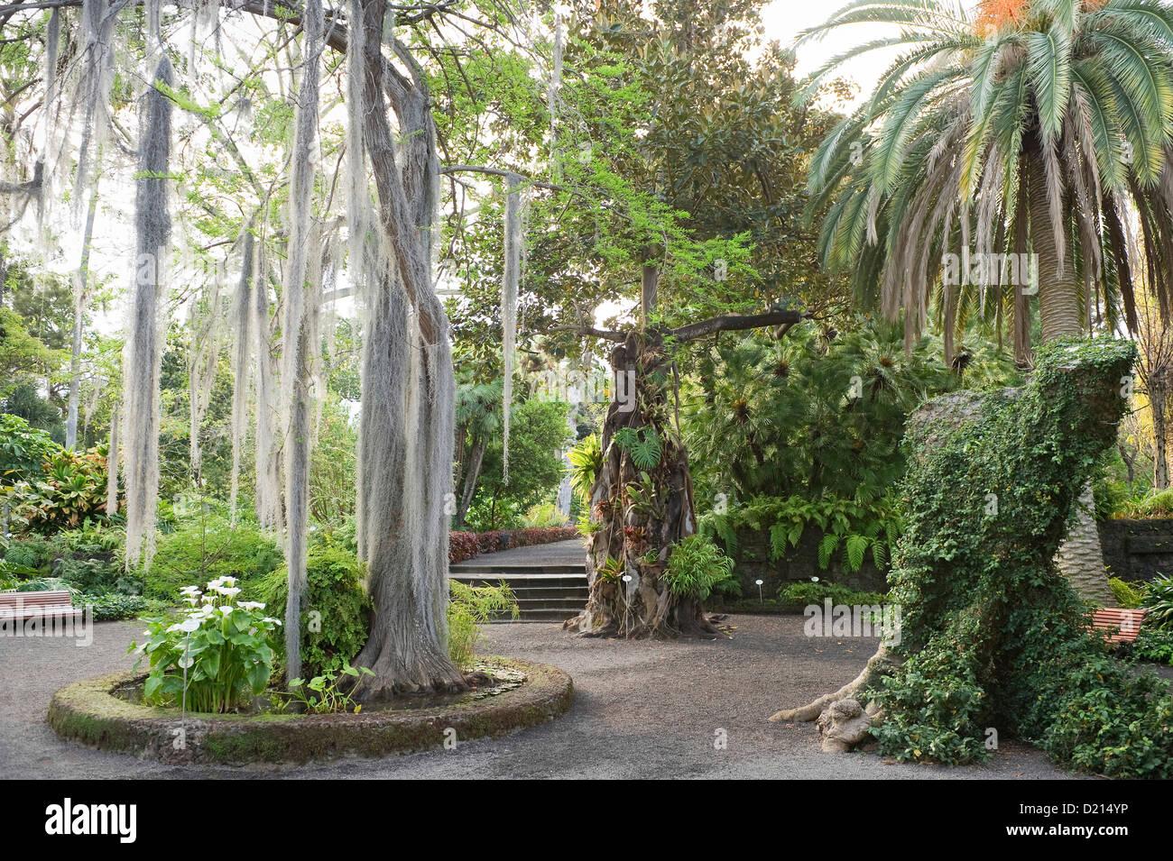 Palm trees at the botanical garden puerto de la cruz for Jardin botanico de tenerife